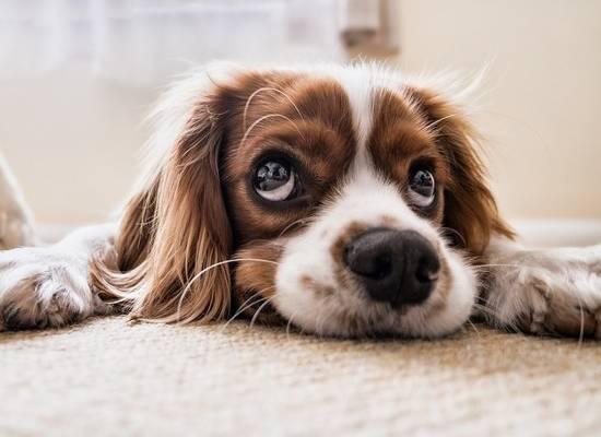 Британским зоомагазинам запретили продавать щенков и котят