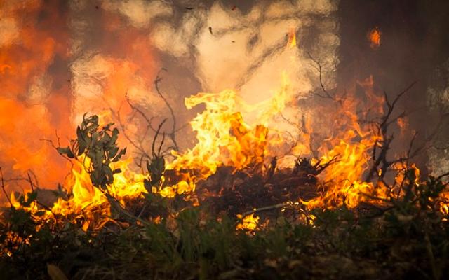Компанию PG&E признали ответственной за лесные пожары в Калифорнии
