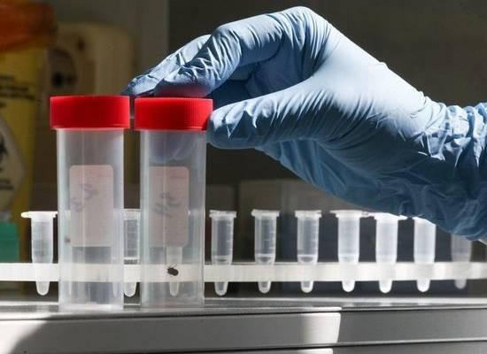 Сюрприз от клещей: обнаружен новый вид переносимого ими вирусного заболевания