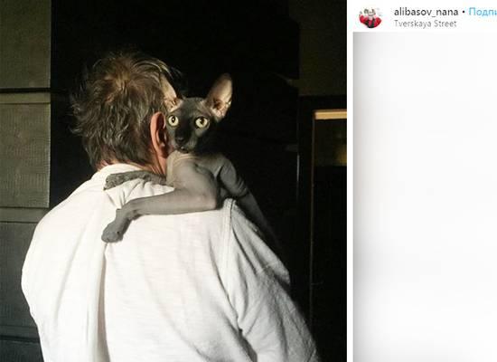 Кунгфуисты нашли пропавшего кота Алибасова