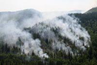 Путин поручил Минобороны подключиться к тушению пожаров в Сибири