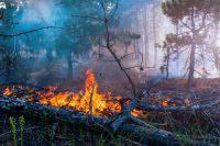 В Красноярском крае сняли режим ЧС из-за лесных пожаров