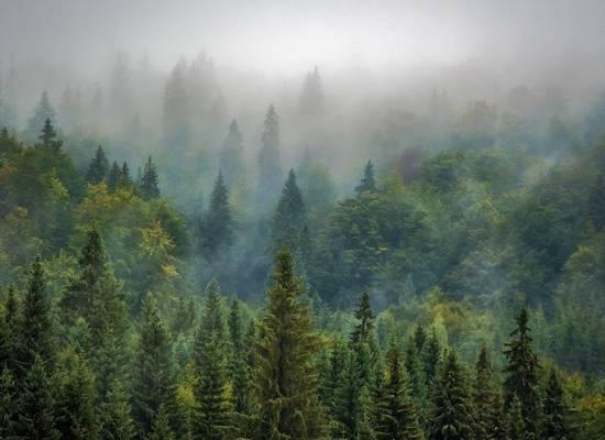 Более 3,5 млн саженцев высадили с начала волонтерской кампании «Сохраним лес»