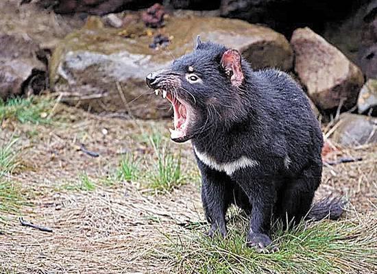 """Психролют и злая щитоспинка: названы самые """"зловещие"""" животные планеты"""