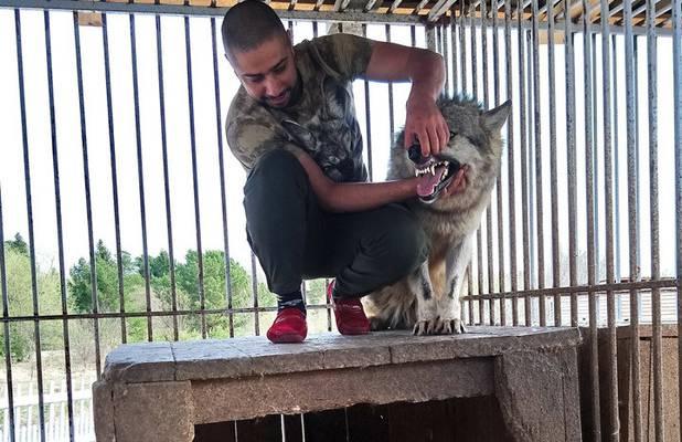 """Затевахин и Дроздов рассказали о """"пытках"""" диких животных в квартирах"""
