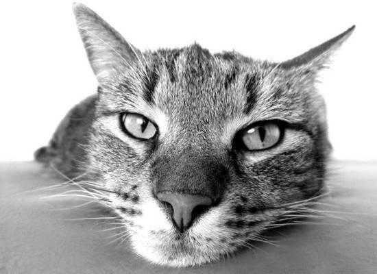 Кота и не приметил