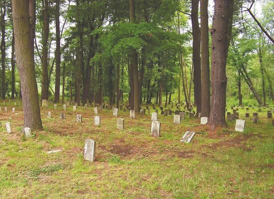 В Нью-Йорке начали копать братские могилы для умерших от коронавируса