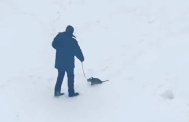 """Каких животных россияне используют для """"карантинного"""" выгула"""