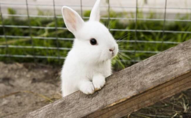 По США распространяется вирус, который приводит к гибели кроликов