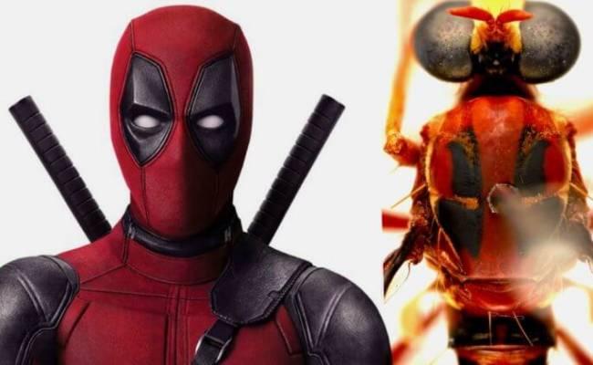 Новые виды насекомых получили названия в честь героев Marvel