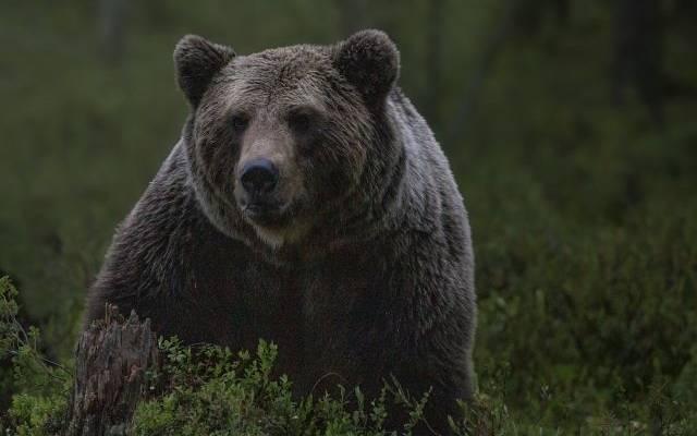В подмосковном цирке-шапито медведь напал на дрессировщика и ребёнка