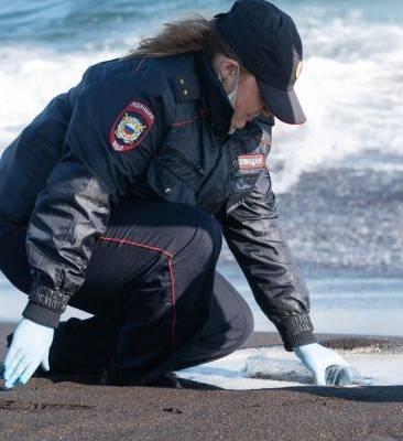 Что стало причиной массовой гибели морских животных на Камчатке?