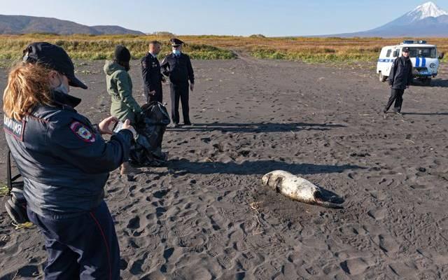 Глава Камчатки сообщил, что обстановка в Авачинской бухте улучшилась