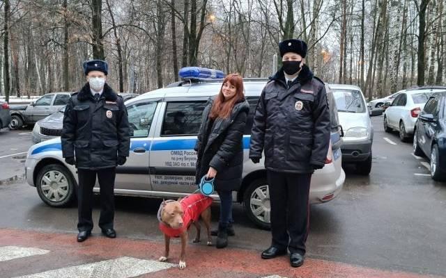 Полицейские в Москве вернули хозяевам похищенного пса
