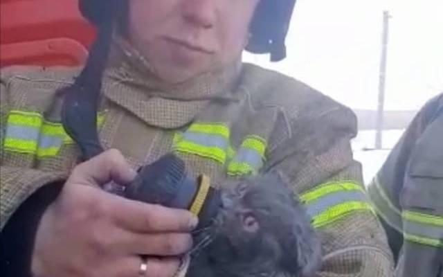Пожарные в Татарстане спасли и реанимировали кота