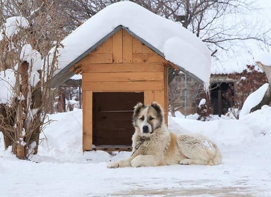 Названы лучшие породы собак для охраны загородного дома