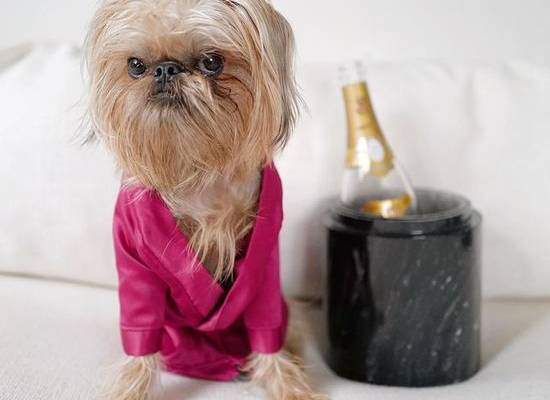 Хмурый пес-Чубакка стал звездой Instagram