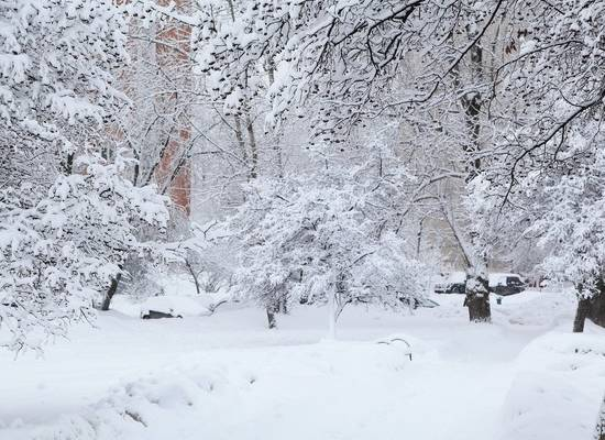 Метеоролог заявила о наступлении новой климатической эпохи в России