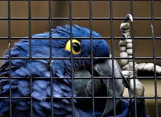 Животных в зоомагазинах запретили трогать