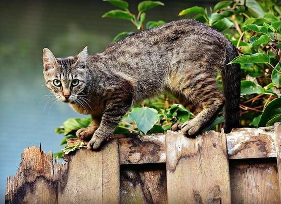 Ученые рассказали, как определить степень боли у кошек по мимике