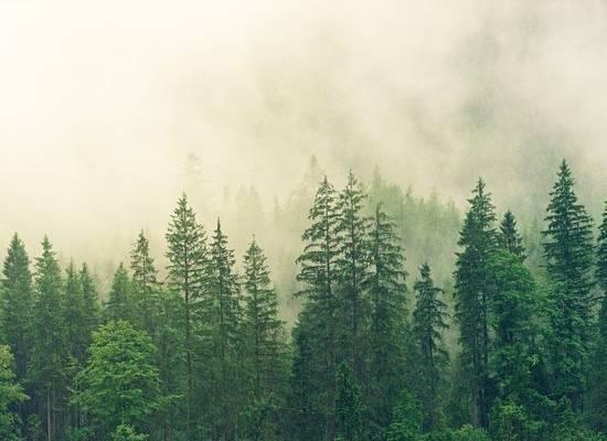 """Появление """"черных лесорубов"""" в лесу решили приравнять к незаконной вырубке"""