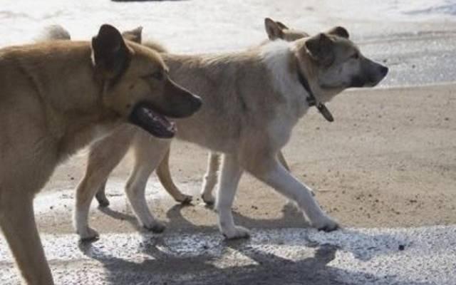 В Башкирии бродячие собаки загрызли четырехлетнего ребенка