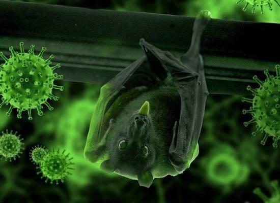 Ситуация с коронавирусом в мире встревожила ВОЗ