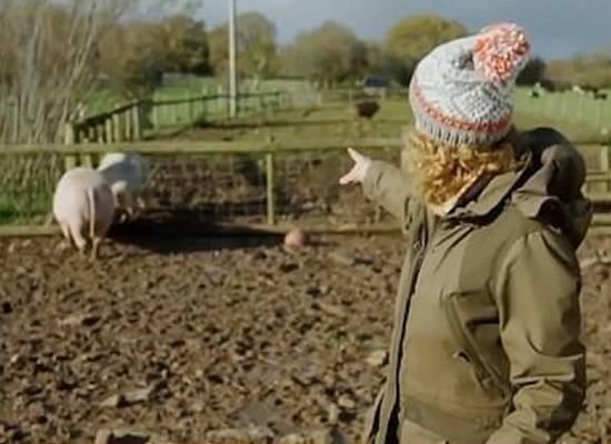 Спаривание свиней в утреннем шоу возмутило телезрителей