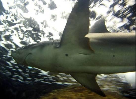 Спортсмен отсудил зуб откусившей ему ногу акулы