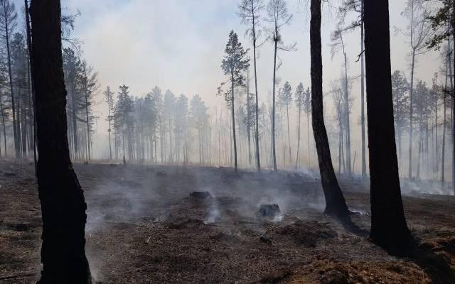 В Тюменской области потушили крупнейший в регионе лесной пожар