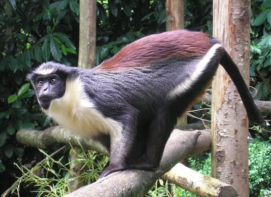Новая напасть: в Британии обнаружены случаи заражения вирусом обезьяньей оспы