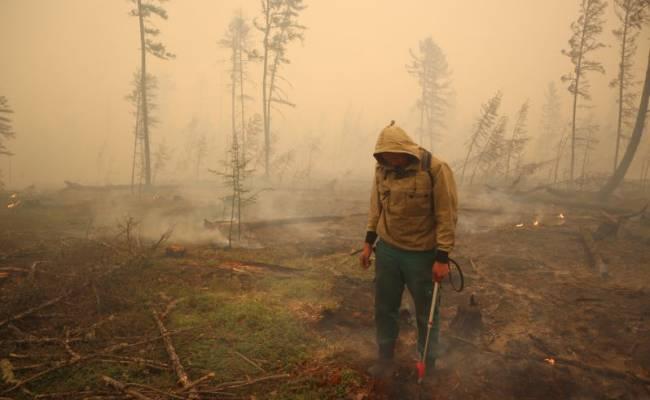 В РФ за сутки ликвидировали 103 природных пожара