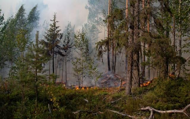 Площадь лесных пожаров в России выросла за сутки почти на 90 тыс. га