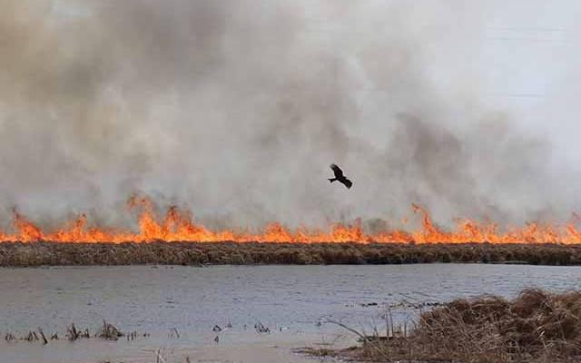 Под Оренбургом загорелась сухая трава на площади трех гектаров