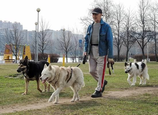 Ветеринар рассказал, как защитить питомца в условиях большого города