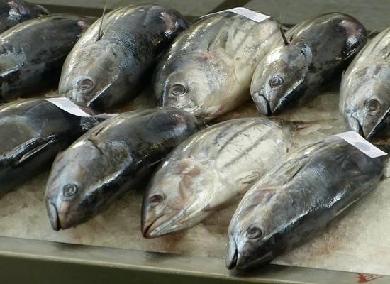 Названа опасность рыбного филе