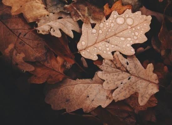 Иммунолог рассказал, чем могут быть опасны опавшие листья